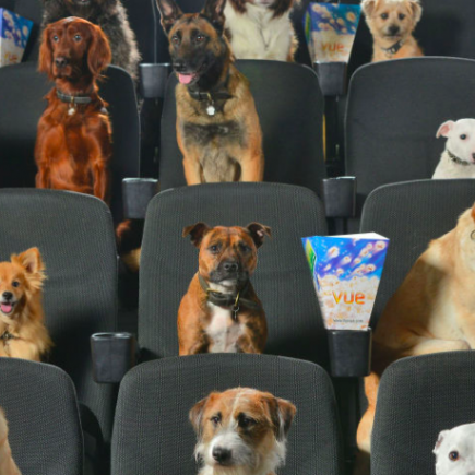 dogs-watching-movies